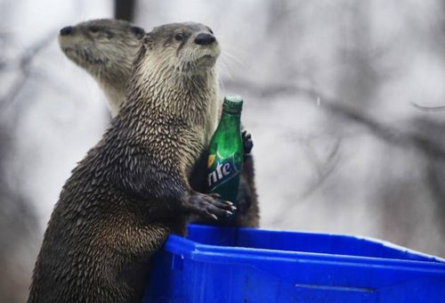 adorable-otters-sprite