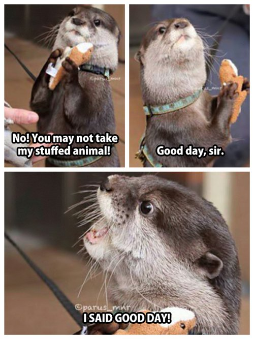 adorable-otters-stuffed
