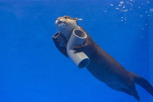 adorable-otters-tubes