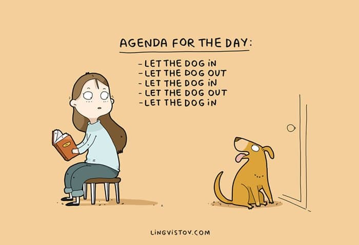 dog-owners-understand-days-agenda