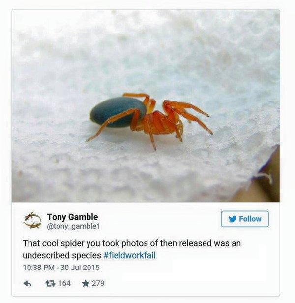 fieldwork-fails-spider