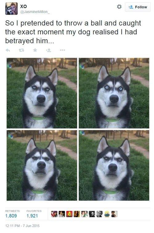 funny-dog-photos-ball