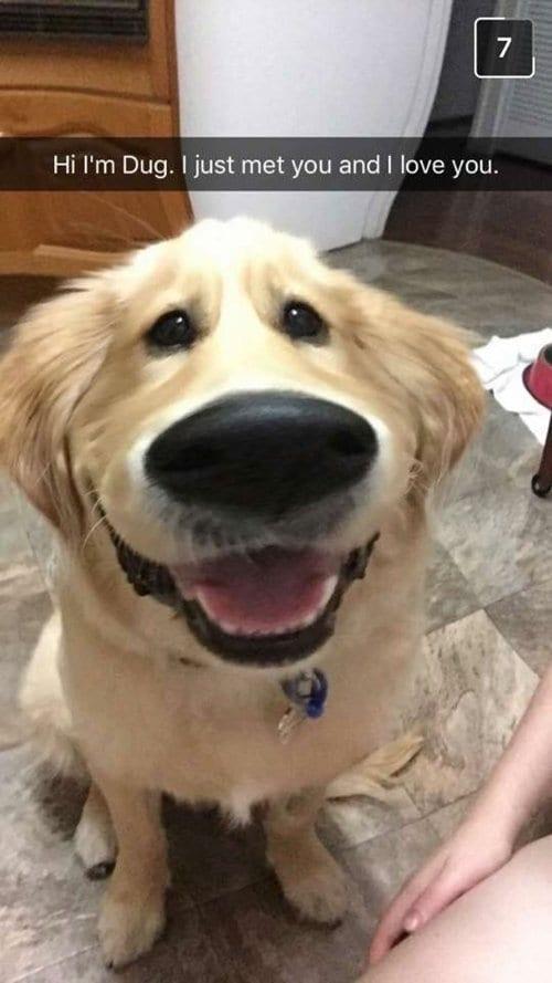 funny-dog-photos-dug