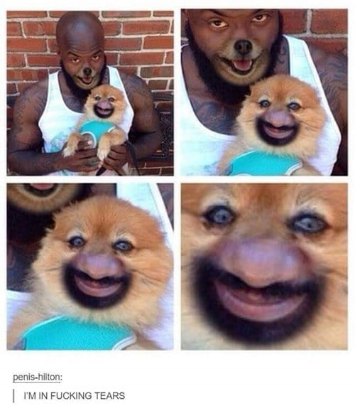 funny-dog-photos-face-swap