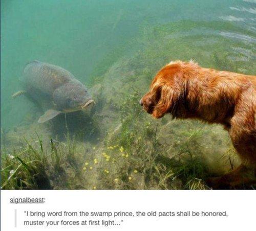 funny-dog-photos-fish