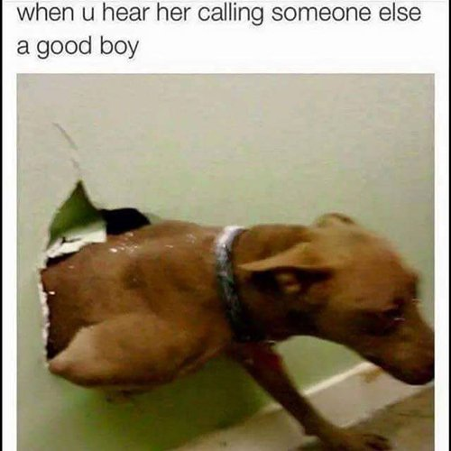 funny-dog-photos-good