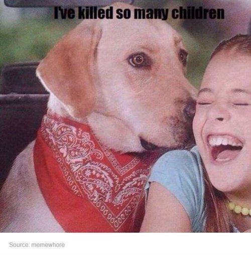 funny-dog-photos-kill