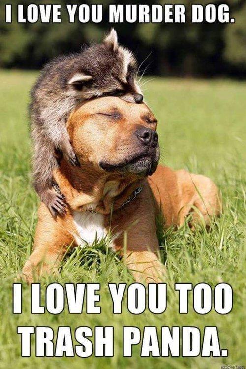 funny-dog-photos-raccoon
