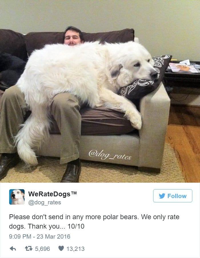 funny-dog-rating-bear