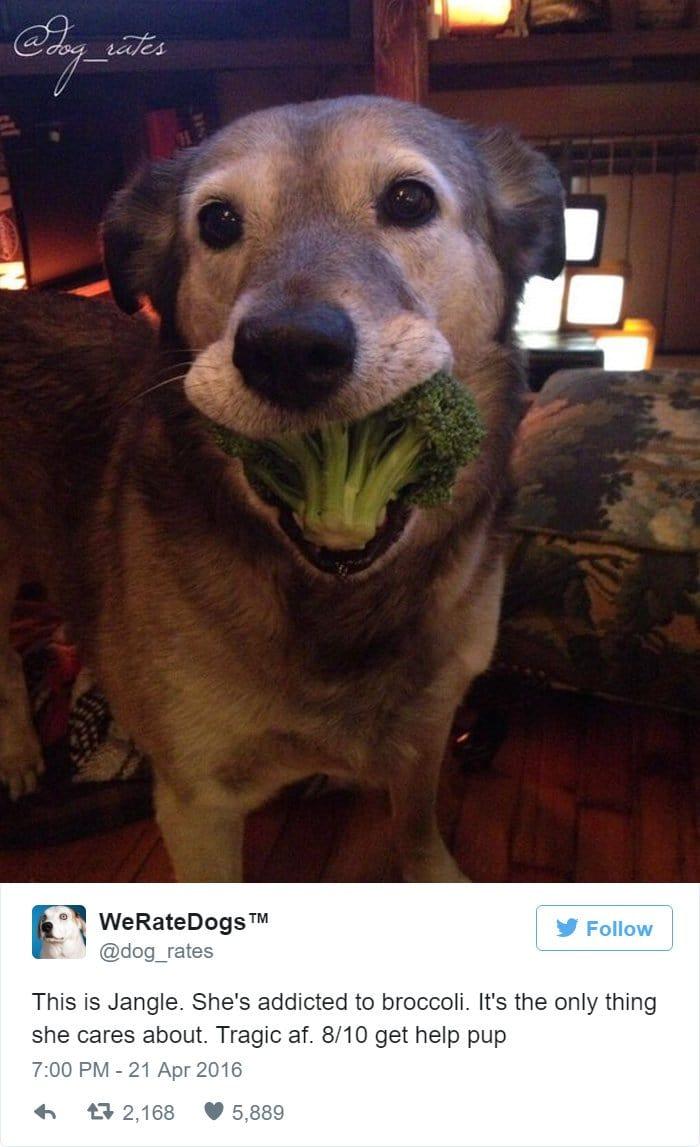 funny-dog-rating-broccoli