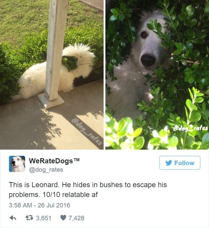 funny-dog-rating-bushes