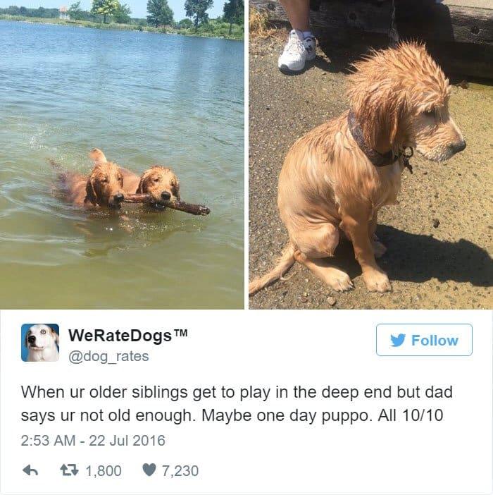 funny-dog-rating-deep-end