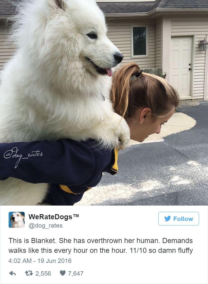 funny-dog-rating-fluffy