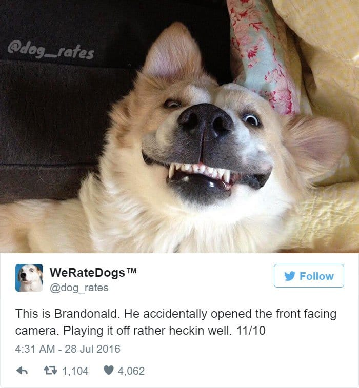 funny-dog-rating-front-camera