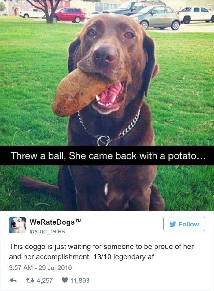 funny-dog-rating-legendary