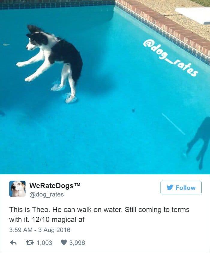funny-dog-rating-magical