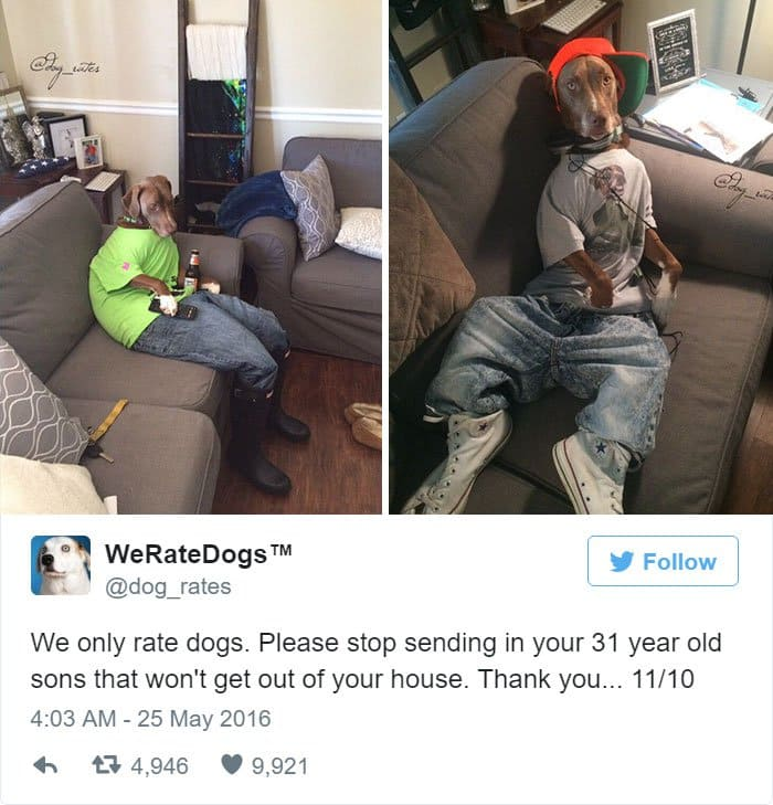 funny-dog-rating-sons