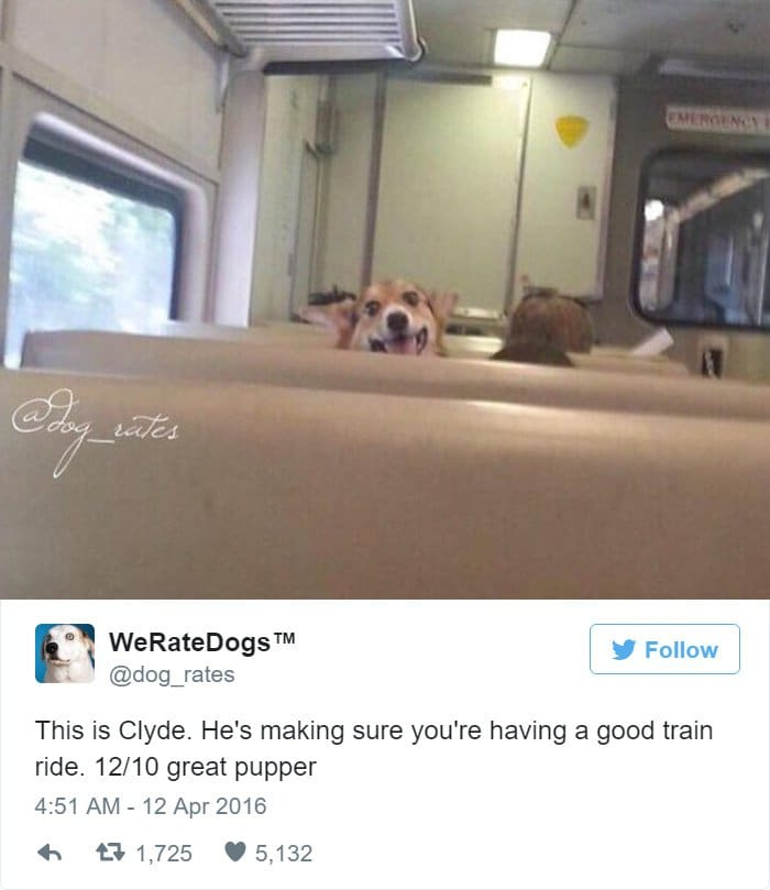 funny-dog-rating-train