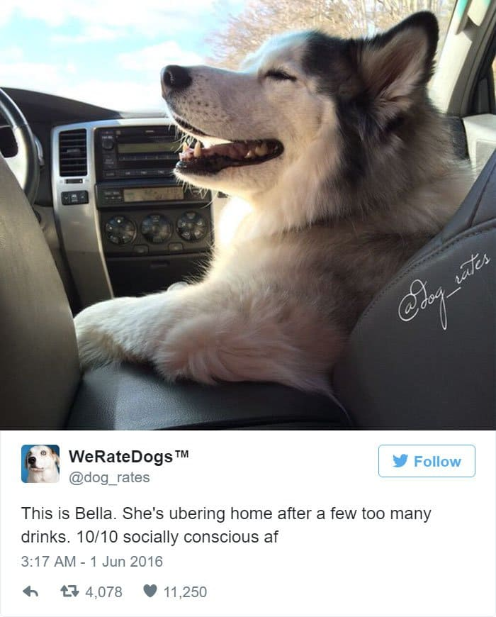 funny-dog-rating-uber