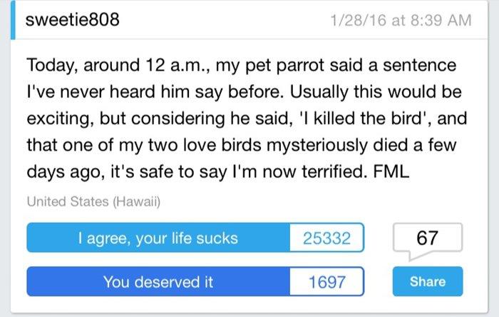 lives-worse-bird