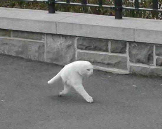 panorama-fails-kitty