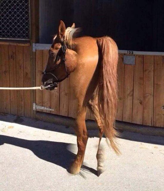 panorama-fails-short-horse