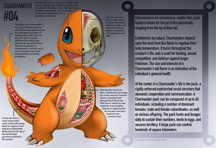 pokemon-anatomy-charmander