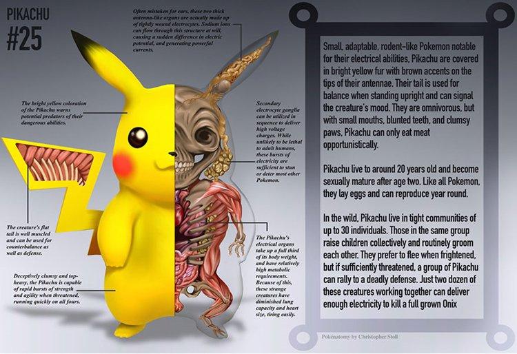 pokemon-anatomy-pikachu