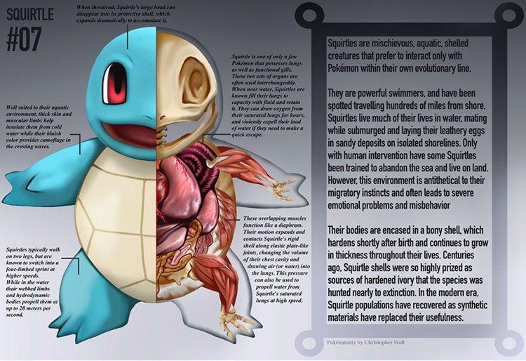 pokemon-anatomy-squirtle