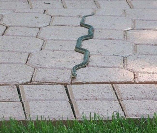 satisfying-images-snake