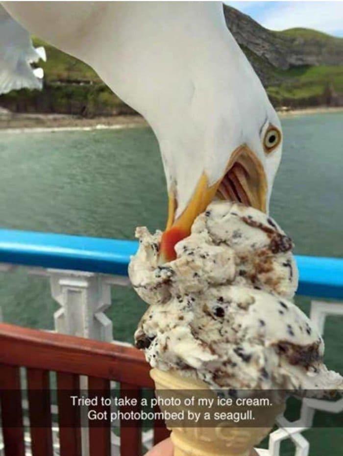worse-day-gull