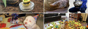 Animals Celebrating Their Birthdays
