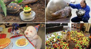 Animals Celebrating Their Birthdays