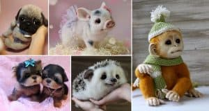 animals-made-from-wool