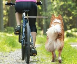 bicycle-dog-leash