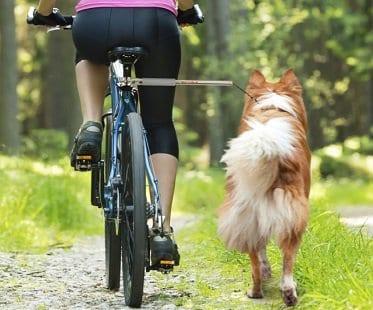 bicycle-dog-leash
