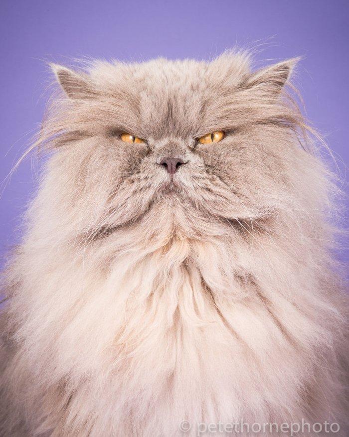 fat-cats-bubba-grumpy-love