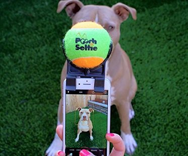 Pet Selfie Attachment pooch