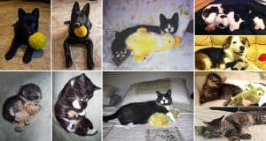 pets-growing-up-favorite-toys