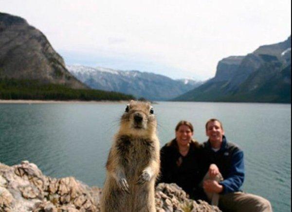 animal-photobombs-lake
