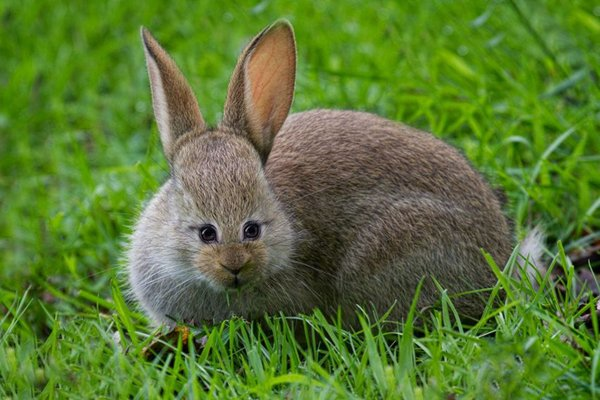 animals-with-eyes-on-front-rabbit