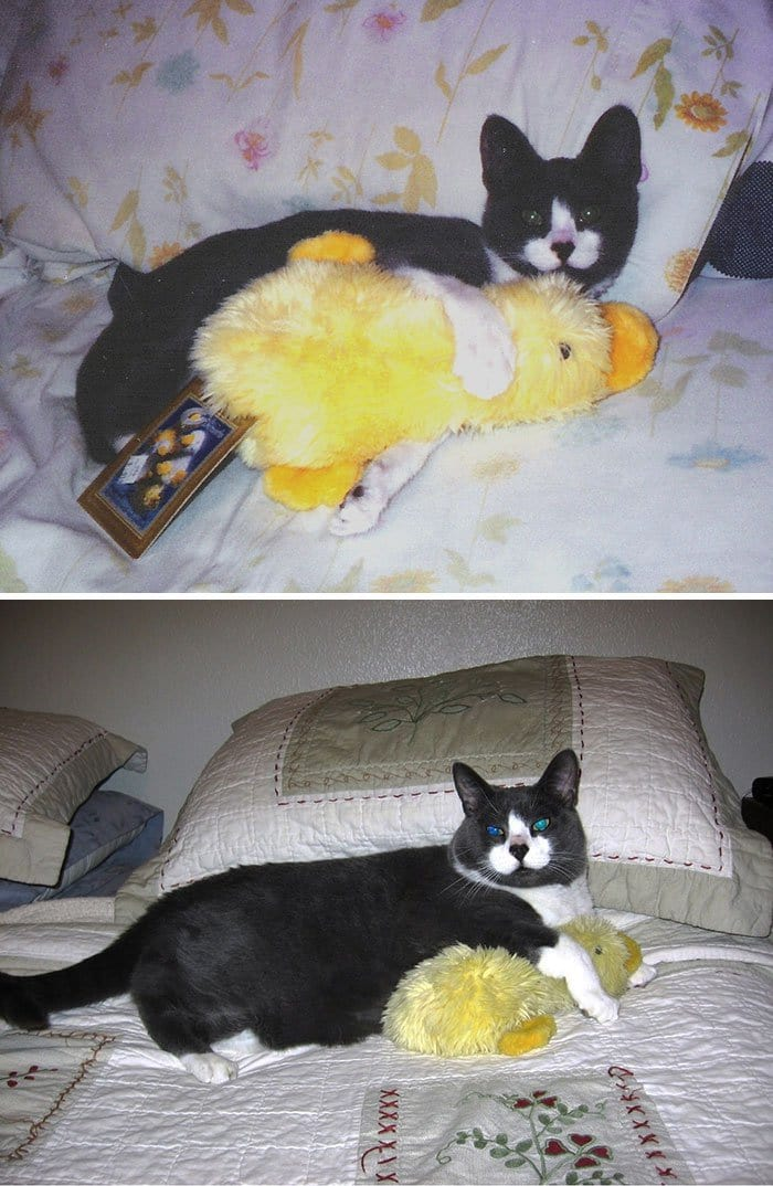 black-cat-and-duck