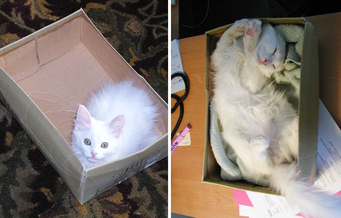 cat-and-box