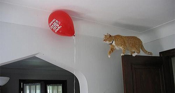 cat going for balloon