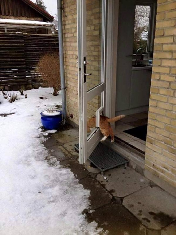 cat-logic-cat-flap-door-open