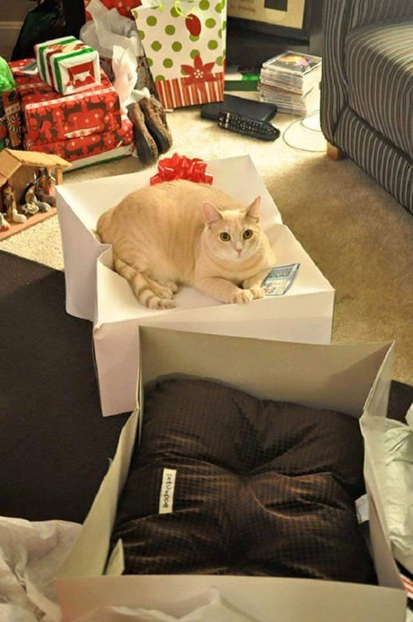 cat-logic-on-box-not-cushion