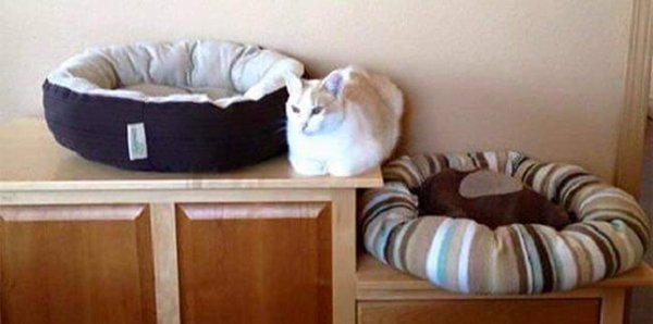 cat-logic-sleep-in-between-two-beds
