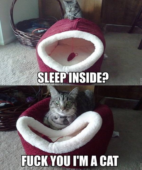 cat-logic-sleep-on-top