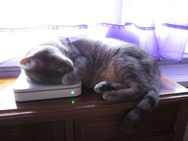 cat on wifi modem