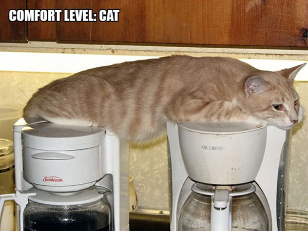 cat resting on two coffee machines